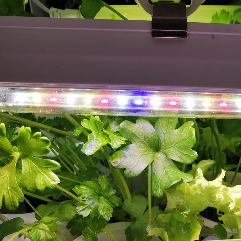 Daylight LED light 10 w for growing plants