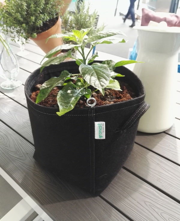 Fabric Pots for Healthy plant growing