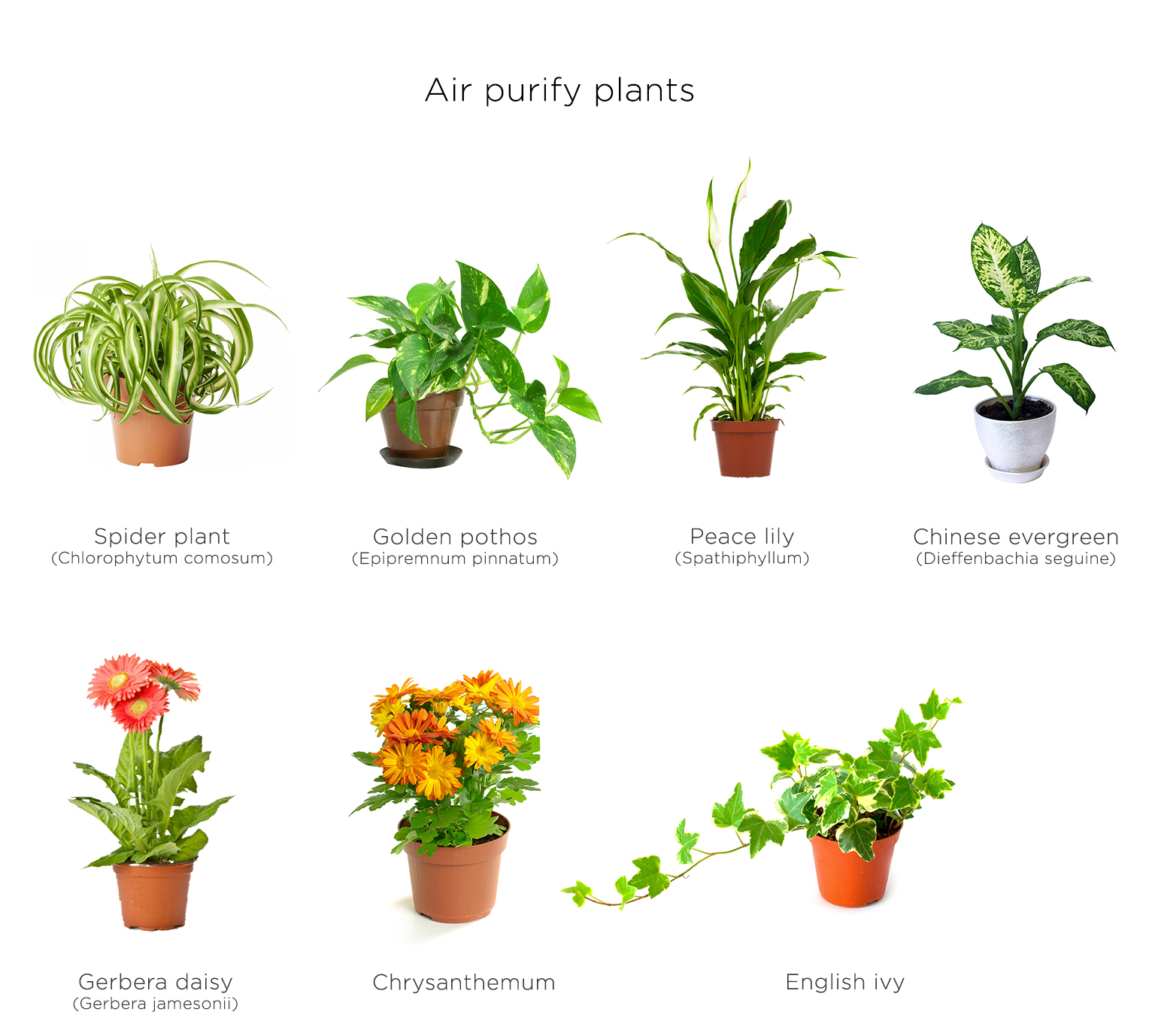Green Wall Air Purifying Plants