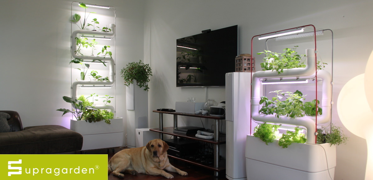 Supragarden Green Wall Vertical Hydroponic Garden System To Home
