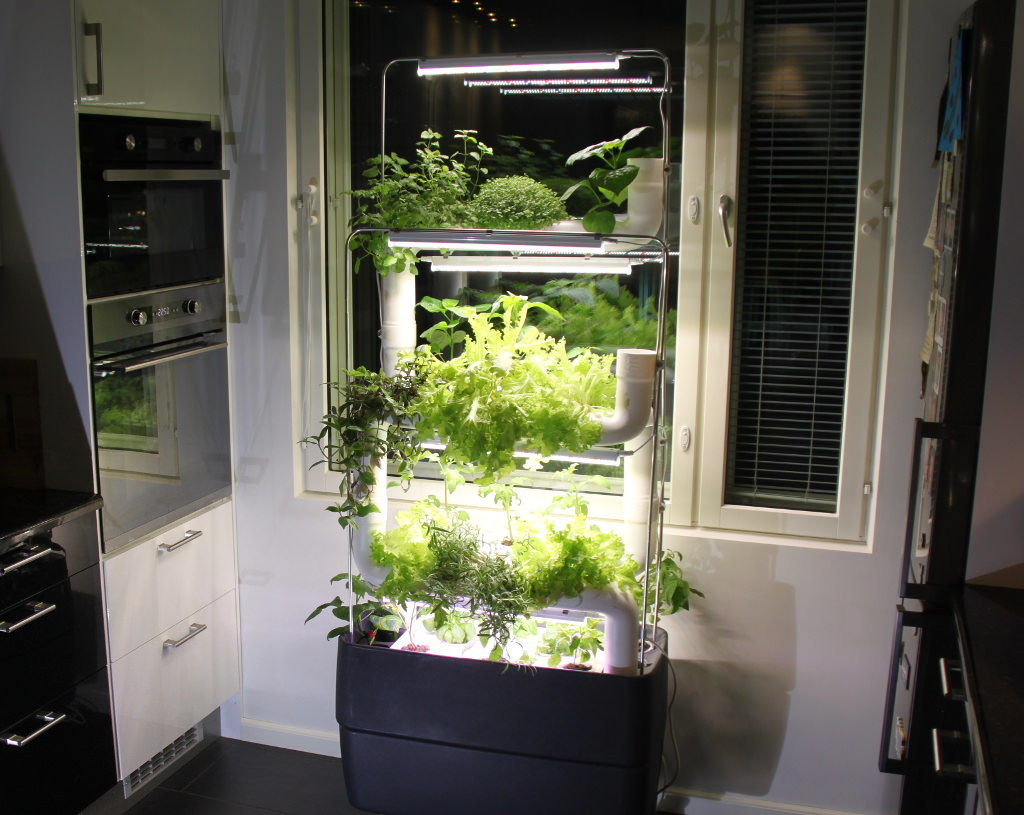 grow_herbs_with_hydroponics