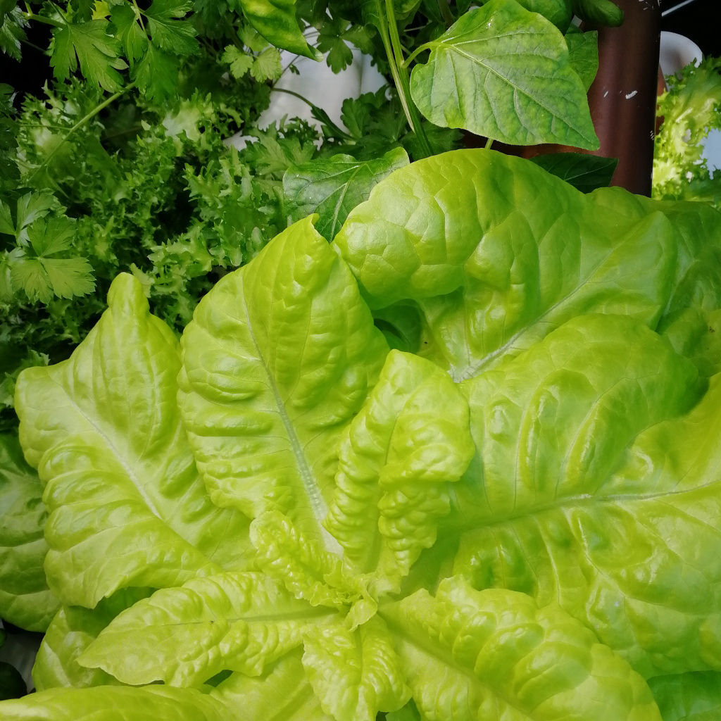 food-grow-with-hydroponics