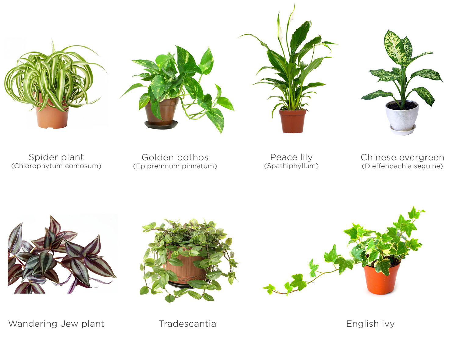 Green-wall-plants-eng